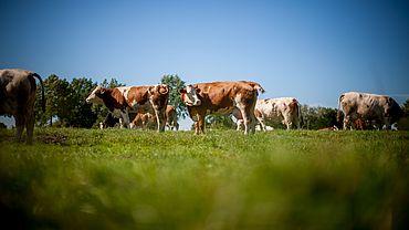 Förderungen für die Landwirtschaft