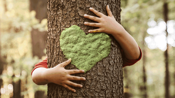 Nachhaltigkeitsfonds