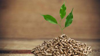 Teaser Biomassefoederung