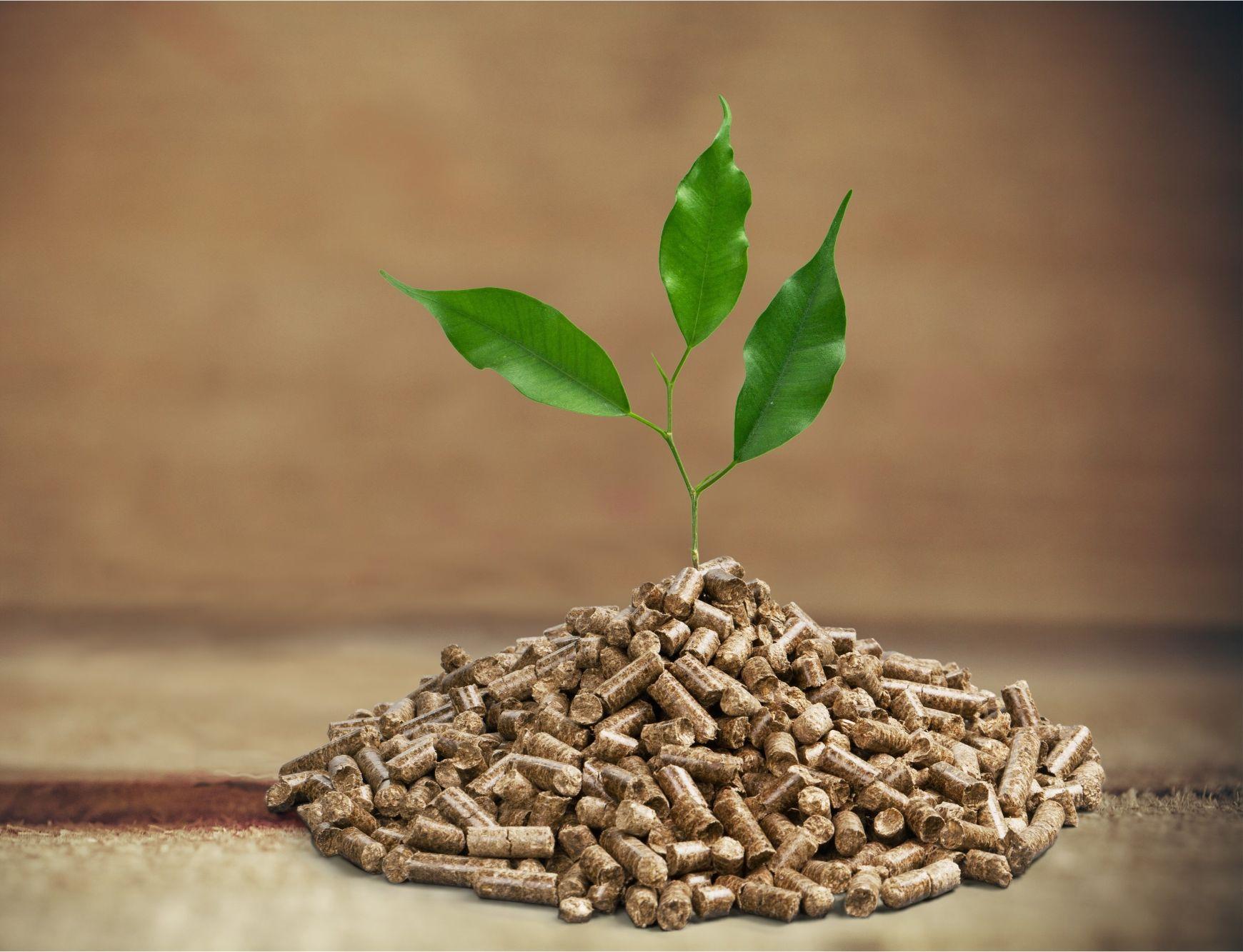 Biomasse-Landesförderung